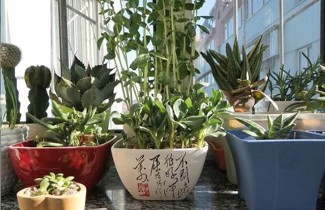 花卉的一切生理机能活动都要有水参与才能进行,没有水分花卉代谢功能将会停止,这将导致花卉死亡。  花卉吸收水分有两个途径,即从土壤水分和空气湿度中得来。  在炎热的季节中,空气湿度大也会相应地降低气温(蒸发吸热原理),对花卉的生长有好处。  一些喜阴湿的花卉只有在较大的空气湿度中才能生存,如:兰花、龟背竹、蕨类和秋海棠类等在夏季要求相对湿度在80%—85%之间,且冬季不能低于65%—75% ;常绿观赏花卉,如:扶桑、白兰花、五色梅、茉莉花、橡皮树、一品红等在夏季要求相对湿度不低于70%,且冬季不低于60%;即使是喜干旱的仙人掌类或多肉植物在夏季生长旺季中,相对湿度也必须在60%以上才能生长良好。   因为在炎热季节里,阳台光照强烈,阳台地面、围栏、墙壁等处吸热多散热慢,阳台气温高,蒸发了空气中和花盆中的水分;另外楼层高的阳台风也大,空气流动加快时也会导致空气湿度偏低。  如果阳台空气湿度长期处于偏低状态,那么花卉植株就会显得暗淡无光泽、没有生气、甚至新芽干尖、叶片有焦边、焦斑,严重影响花卉的生长发育和开坐果,因此阳台养花要增加空气湿度到合适的范围。