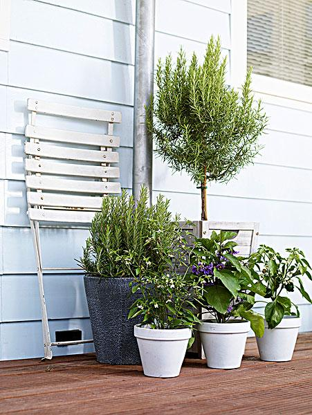 New to growing plants and no idea what you should grow indoors? Learn about these 15 Best Houseplants for Beginners. They all are easy to grow! Potted houseplants provide a lavish look and can be used to decorate the interior at low cost. Also, they create positive impact and many of them purify the air. But what you'll do if you don't have much knowledge about growing plants and the houseplants that are best to grow? Simple! Learn about these 15 Best Houseplants for Beginners! They are easy to grow and tolerate poor conditions. 1. Snake Plant  Snake plant is one of the best plants for the beginners. Easy to grow and hard to kill, it can be grown in low light and need to be watered occasionally. Snake plant also removes toxins from the air– All this makes it a perfect houseplant for beginners. 2. Heartleaf Philodendron Philodendron scandens is extremely easy to grow and great for beginners. It needs a moderate amount of light and prefers the soil to dry out between watering spells. 3. Spider Plant  One of the most popular houseplants. Its popularity is due to its toughness and the ease of growingand maintenance. The plant can easily adapt to almost any condition. Keep the plant in a bright spot and maintain slight moisture in the soil and it will grow happily. 4. Peace Lily  The peace lily is among the easiest plants to grow indoors. Itcan tolerate a wide range of lighting conditions, and needs only moderate watering. With graceful curving leaves and white flower that rise up from the dark foliage, peace lily looks exotic and elegant. 5. English Ivy  English Ivy is very hardy and easy to grow. Keep the pot in a spot that receives bright indirect sun and plantit in a container that is wide and shallow rather than narrow and deep. 6. Succulents and Cactus  Succulents and cacti are ideal for those who forget to water and care for plants. They are very adaptable and can survive manyadverseconditions. They need to be placed on a bright spot and a well-drained soil with l
