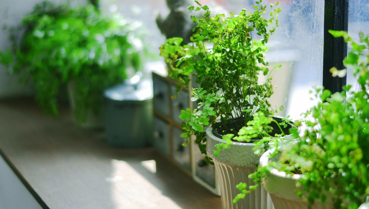 Learn how to make a windowsill herb garden, if you're short of space. Pleasure of harvesting your own herbs is immense– you can make fresh tea, use them in salads and garnish them on food.You don't need a big yard for this, just a small and simple windowsill that receives a few hours of sunlight.  It's easy and anyone who have lack of space can create a mini herb garden that grows on a window sill. Here are 6 basic steps to follow to make it possible.How to  Make a Windowsill Herb Garden  1. Choose Suitable Container to Make a Windowsill Herb Garden Either use lot of pots to grow specific herb in each one or choose a planter as wide as that it'll cover the space of your windowsill easily, make sure the pot you use should be at least 6 to 12 inches deep. Herbs are shallow root plants so they don't mind growing in less deep planters. But most of the herbs like mint and thyme have tendency to spread, so it's good to select a large and wide pot for them.  One more benefit of choosing a large pot is that you can pour lot of soil in it and this will save you from frequent watering.    2. Ensure sufficient drainage Once you select a container or containers, second step is to ensure good drainage. Check out the bottom of planter for drainage holes, if they are not sufficient, make some. You don't need to put gravels or clay balls to make a drainage layer. This is a myth and doesn't do any good for drainage.  3. Provide quality Potting soil Soil or growing medium for growing herbs should be of best quality. It have to be light, penetrable, fertile and airy. Buy soil less potting mix or make your own by adding perlite, compost and garden soil, it is the best growing medium for containers and essential for the success of your windowsill herb garden.       An aerated and rich soil with good retention power of the water improves the quality of plants you grow.  4. Planting a Windowsill Herb Garden Be realistic and don't try to grow all the aromatic and tastiest herbs you've hear