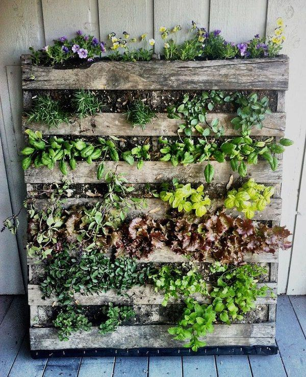 salad greens or ornamentals growing in a limited space you have this way here are a few more ideas using pallets in the garden - Garden Ideas Using Pallets