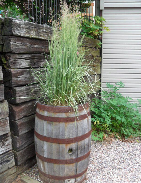 Best ornamental grasses for containers growing for Tall ornamental grasses for shaded areas