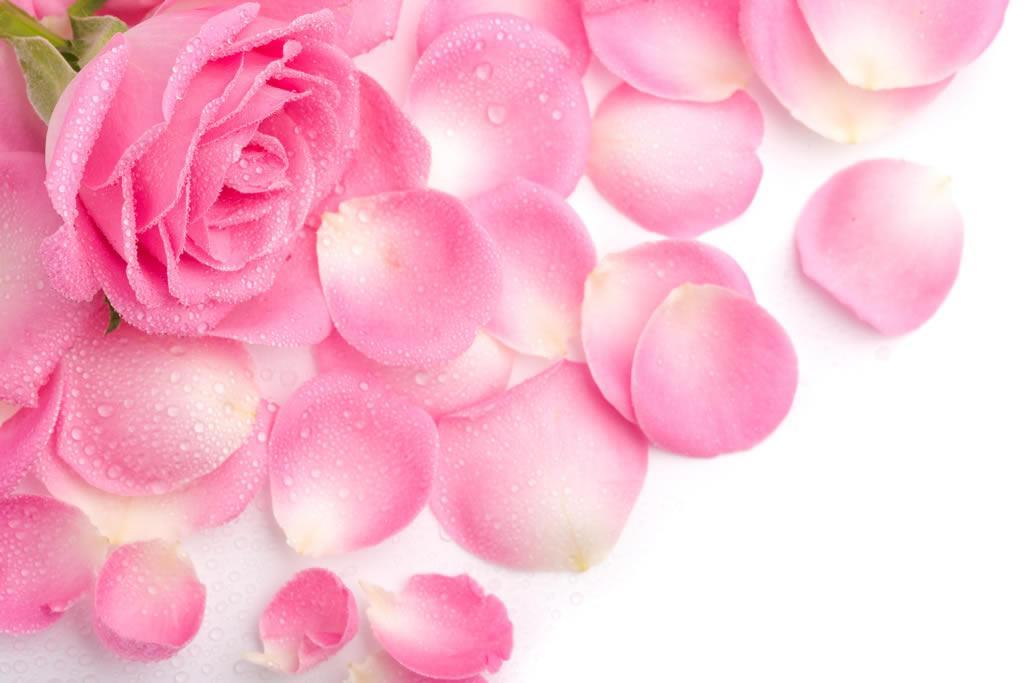 红玫瑰  基本上,红玫瑰就是最常见的玫瑰花了,它是很常见的一种切花,也是情人之间表达爱意的一种花卉。其实真正的红玫瑰是不存在的,市场上的切花其实是月季花,花草茶中的红玫瑰则多是平阴玫瑰。  黄玫瑰  黄玫瑰也是常见的一种花卉,姿态优雅,色彩明丽,多用它来表达友情。其实在切花中的黄玫瑰多是切花月季中的一种。  紫玫瑰  紫玫瑰也是玫瑰花的一个品种,它的花朵比较小,但是香气比较浓郁。紫玫瑰具有很多的功效,包括美容和调节人体。   白玫瑰  白玫瑰也是不可忘记的一种玫瑰花,它喜欢光照比较怕寒。在养殖的时候,以疏松肥沃的中性或者是微酸性的土壤生长会比较良好。其实常见的切花白玫瑰多是白月季。  黑玫瑰  黑玫瑰其实就是黑色月季花,常见的切花黑色月季有两种,每一种都有着自己独特的外形和观赏性。  绿玫瑰  传说中,绿玫瑰是来自以色列的,也名叫碧海云天。不过真正的绿玫瑰其实是不存在的,切花中的绿玫瑰其实就是月季花。  橙色玫瑰  橙玫瑰也是是玫瑰花的一个品种,它的花语是友情以及青春美丽。  蓝玫瑰  蓝玫瑰一种转基因玫瑰花,被植入了可以产生蓝色素的基因,所以花瓣呈现出蓝色。  蓝色妖姬并不是蓝玫瑰,而是经过人工染色的玫瑰,将白玫瑰染成蓝色的。  七彩玫瑰  七彩玫瑰也是调色产生的一种玫瑰花,它也是从白玫瑰变化而来的。在培育的时候,水中添加色素和燃料,当花瓣吸收水分,就会变成这缤纷的颜色。