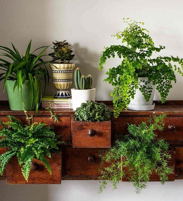 Make Indoor Garden 15 brilliant diy vertical indoor garden ideas to help you create use an old dresser to create a stunning indoor garden plant some ferns and succulents in its drawers and also place some on top to create a beautiful workwithnaturefo
