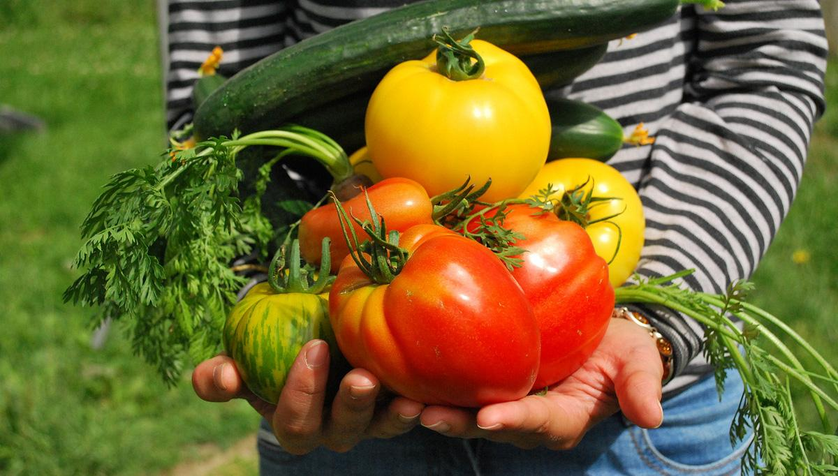 If you want to have a successful and most productive VEGETABLE garden, do crop rotation. Learn everything you need to know about it in this informative guide!  What is crop rotation? Crop rotation is the practice of dedicating a single spot in the garden or patch of land to only one type or family of vegetable or crop for a certain time period. Specifically, members of one plant family must never be planted in that same spot or area more than once in a period of four years. Do you know crop rotation boosts the yield, prevent soil-borne diseases and weeds, and improves soil condition?  This is done for two reasons. First, this helps prevent the spread of soil-borne diseases and pests; second, doing so allows soil nutrients to be replenished and used properly. Read on to know more about the crop rotation benefits.  If you want to read more about the crop rotation benefits, head over to this educational website! 1. Disease Prevention  Garden insects and pests have a tendency of feeding on plants that are related to each other. For example, let's say cabbage-eating insects have laid their eggs on the soil before death. If cabbage or another vegetable from the same family will be planted in that exact spot, those eggs will hatch and start feeding on the new plants, thus continuing the cycle. The same applies to soil-borne diseases like bacteria and fungi, and so by planting a different type of plant, you prevent pests and disease from re-emerging in the garden.  2. Prevent Soil Nutrient Depletion  Crop rotation can also help in preventing the depletion of soil nutrients. Crops grow when they absorb sufficient amounts of the following nutrients: phosphorus, potassium, and nitrogen. If plants from the same family are grown on the same patch of soil, expect more of those nutrients to be absorbed. As long as the same plants are raised on that section of the garden, those same nutrients will be absorbed, and eventually, they will be depleted. For this reason, it's usually rec