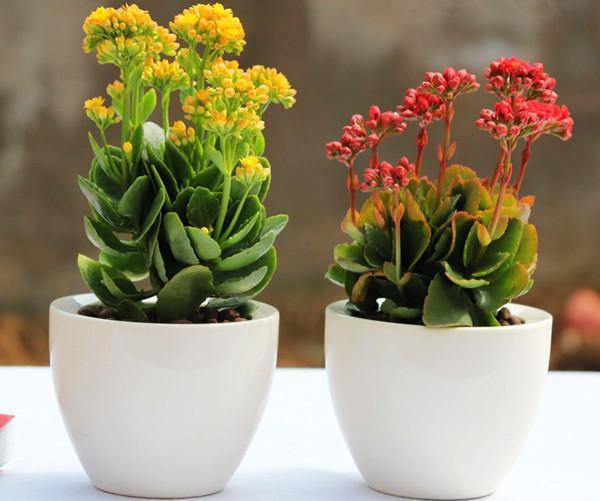 最近天气早晚变凉,气温下降,日照时间渐短,花卉的生理活动也从旺盛期转入平缓期或冬眠期,要根据特点进行养护。家庭花卉如何养护成为业余养花爱好者的难题,就晚秋如何养护家庭花卉谈几点看法与大家共勉。  防寒 扶桑、一品红、秋海棠、茉莉、龟背竹等喜暖花木,在气温10℃时应移入室内;吊兰、文竹、鹅掌柴、橡皮树等,在气温低至5℃时也要移入室内;绝大多数花卉应在霜降前入室。盆花在室内要注意通风,在中午气温较高时可打开门窗通风散热。茉莉、九里香、杜鹃、君子兰、仙客来、蟹爪兰等花卉应放在阳光充足的地方,使其充分接受光照,让叶片更好地进行光合作用,及时供给营养,使其能安全过冬。  浇水 阳台和明厅里的榕树、橡皮树、鹅掌柴、巴西木、发财树、米兰、茉莉、腊梅、梅花、山茶、茶梅等观赏植物,要控制浇水,减少浇水次数和浇水量。对冬季及早春开花的腊梅、梅花、山茶等,更应控制浇水,多喷水,以利于其花苞的形成。浇水时间以10时到15时为宜。搬入室内的龟背竹、春羽、朱蕉、鸟巢蕨、红掌、竹芋类、绿萝等盆栽观叶植物,都应以喷水为主、浇水为辅,以保持盆土不干。  施肥 君子兰、马蹄莲、大花蕙兰、凤梨等,可浇施0.2%磷酸二氢钾和0.1%尿素的混合液;玳玳、金橘、火棘等,可浇施少量低浓度的速效磷钾肥;米兰、珠兰、茉莉等,也可追施1次稀薄的磷钾肥,以利其顺利过冬。对大部分观叶植物,要停施氮肥,适当追施一些低浓度的钾肥,可增加花卉的抗寒性。  修剪 移入室内的盆景、盆花,应剪去其枯枝败叶、过密枝、病虫枝、瘦弱枝等;对徒长枝可进行强度缩剪;对已造型1~2年的盆景绑扎物可解去,或在解开后再重新绑扎,以防长时间在固定位置上勒捆,伤及枝条形成层,造成枝叶枯死。放在阳台上的树桩盆景,如榔榆、鹊梅、三角枫、榕树、罗汉松、圆柏、龙柏等,须进行必要的修剪。茉莉、紫薇、石榴等,可在晚秋进行剪枝,减少植株在冬季养料消耗,促进盆花多储存营养,使来年多开花。  除虫 晚秋仍是病虫害比较严重的季节,花木易遭受介壳虫、红蜘蛛、蚜虫、白粉虱等虫害。病害包括叶斑病、枝干的腐烂病等。在盆花入室前,必须彻底治疗这些病虫害,绝不让其入室危害花木。  留种 在北方,许多宿根花卉在这个季节叶子开始枯黄,准备入冬休眠,如玉簪、美人蕉、大丽花、小丽花等,这些植物的根茎应该保存在花盆中让其休眠。菊花在盛花期过后,也会花谢叶黄,此刻应齐根剪去枝条,留着老根保种。葫芦、丝瓜、草茉莉等种子已经成熟,这时应该采集种子保存起来,以备来年播种。