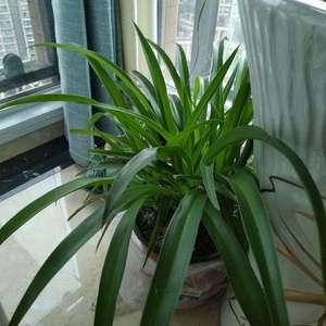这个什么植物