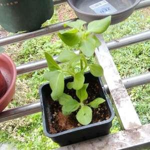 请问这个小植物是什么