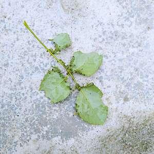 10几条虫子🐛,把花的叶子都吃光了。怎么办😱