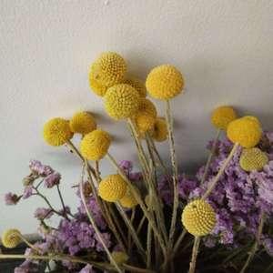 这是什么花的干花?