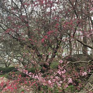 春天来了,好多人出来看花🌹