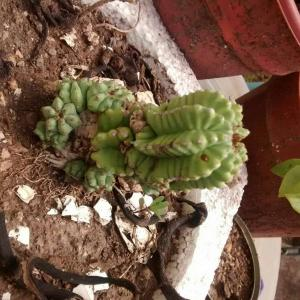 cuál es la idea de este cactus?