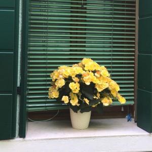 这是什么花,欧洲旅游拍的