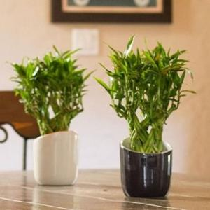 Whether you want to make an indoor garden or you already have one– Check out some of the best & most essential indoor gardening tips for help!