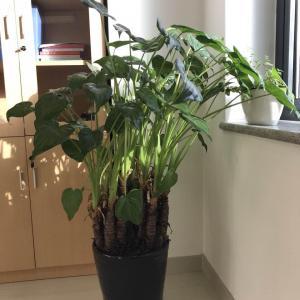 这是什么植物?不知道名字