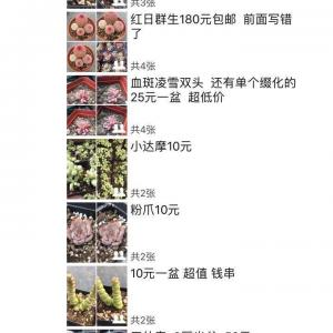 每天微信特价肉出售!微信103319980 暗号:绿手指。定期点赞送肉! 上海宝山红阳花木城西区五号门G-1 实体大棚 淘宝保证 放心购物   淘宝:奶牛多肉铺二皇冠