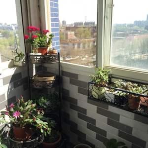 绿手指入坑,第一趴。先放上我的微小花园,虽然小,但是光照充足,通风很好,自从整理出阳台,把花移到阳台上,买回来许多年不开花的万寿花和蟹爪兰,今年开的那个旺啊,真是开心😃