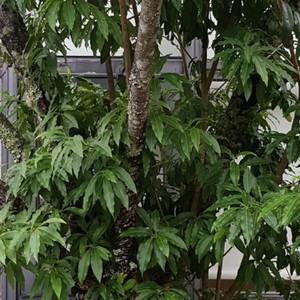 請問這個是什麼樹?