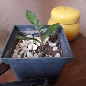 ¿Alguien sabe el nombre de esta planta?
