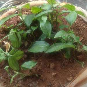 这是什么植物啊