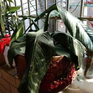 不知道是因为什么植物没有一点生气,我以为没水,但是浇了水还是这样,焉焉的。