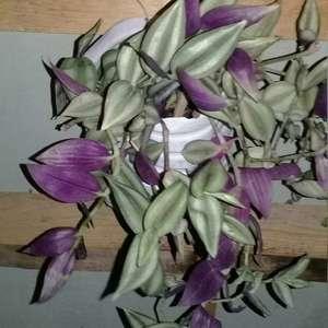 cual es el nombre de esta planta