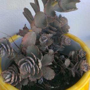 Cuál es el nombre de la planta?
