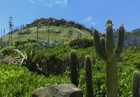 Modern Trends: Cactus Garden Ideas & Tips