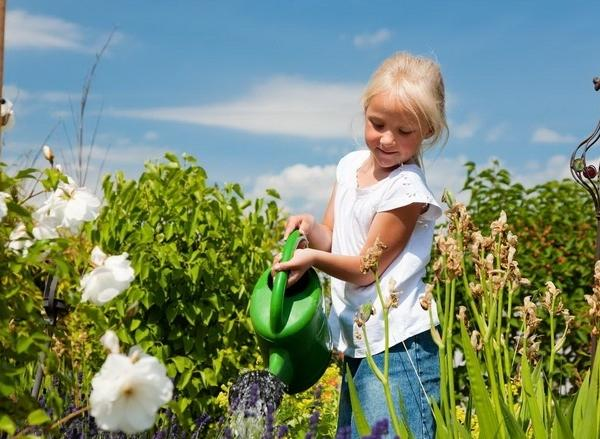Tips for Summer Vegetable Gardens in Phoenix, Arizona