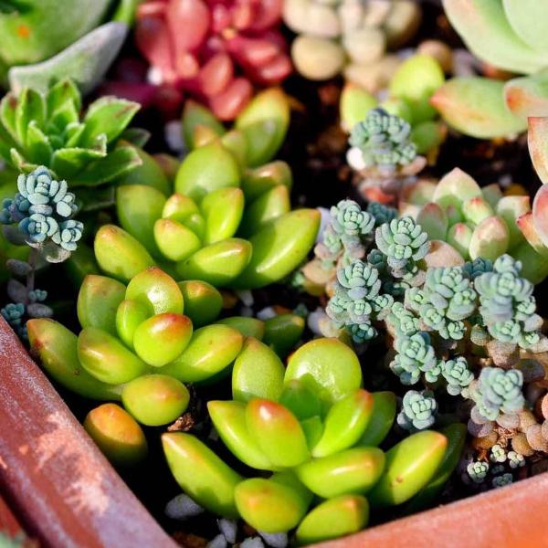5 Tips for How to Care for Succulents Indoors During the Winter