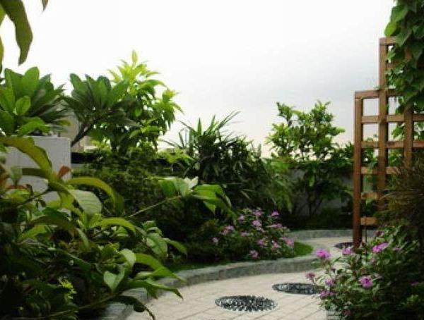 Best Terrace/Roof Garden Plants You should Grow
