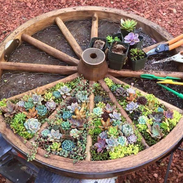 Succulent Herbs