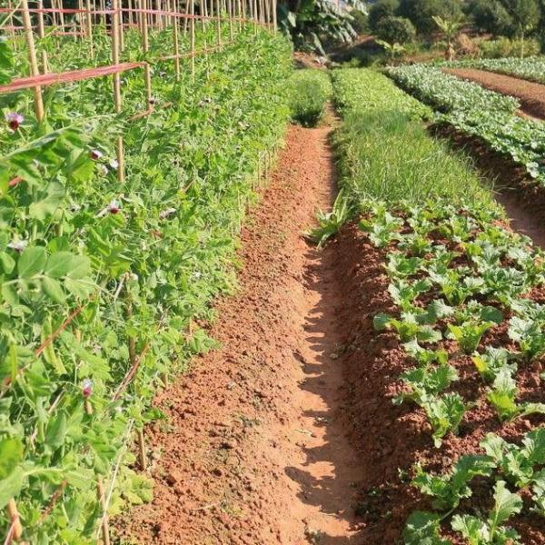 How to Add Boron to the Vegetable Garden