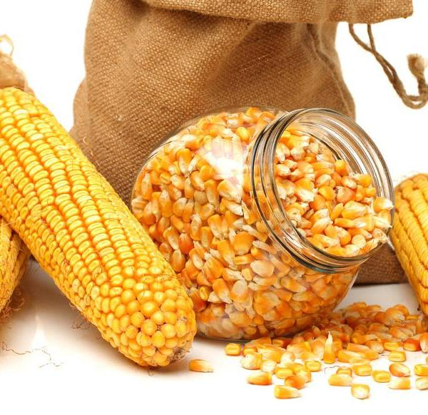 Planting and Growing Corn in Containers