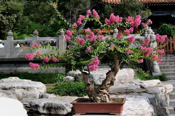 19 Blazing Tree Stump Planter Ideas that'll Impress You