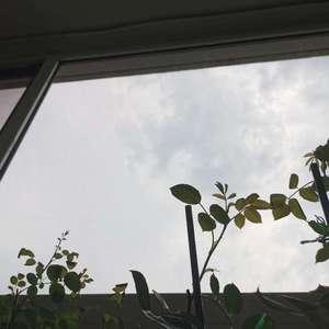 北京好几天都没有正经阳光了……接下来几天也是……