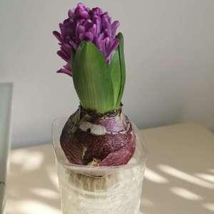 为什么感觉茎还没有长出来就要开花了?而且长歪了!!长歪要怎么处理?日常应当接受多长时间的光照啊? 求求大家了