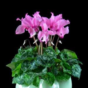 选购花卉应注意些什么