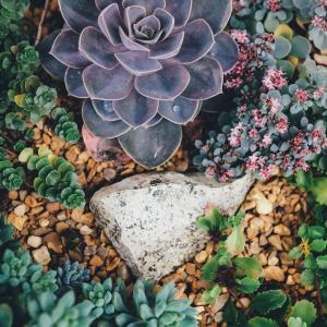 Boring? Let's Grow Succulents Indoors!
