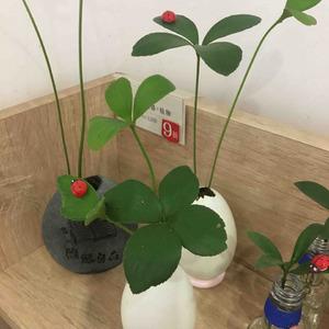 請問一下各位這植物名字?