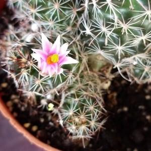 identifying plants.