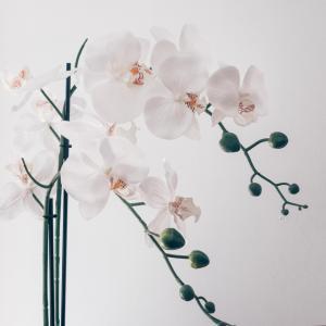 Aquarius × Orchids