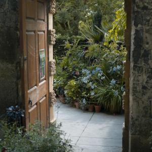 10 ways to garden during lockdown