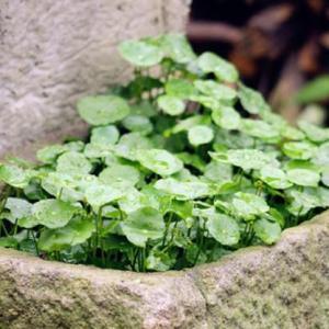 提高植株周围的空气湿度有哪些办法