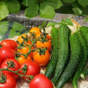 What Vegetables Grow in China?