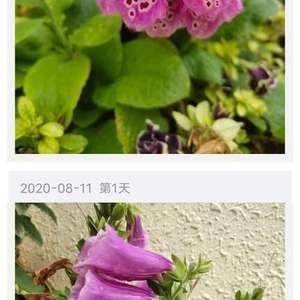 这花叫什么名字,谢谢!