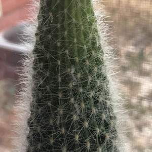 Do you guys think my cactus has mealy bugs? I searched some pictures and some of it looked similar but some didn't.. I dont know what else it could be though!