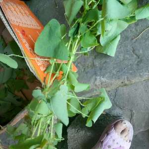 这个植物叫什么名字