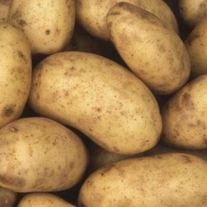 How to Store Seed Potatoes