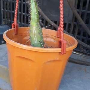 mi planta se está por morir?