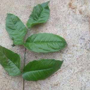 这是什么植物